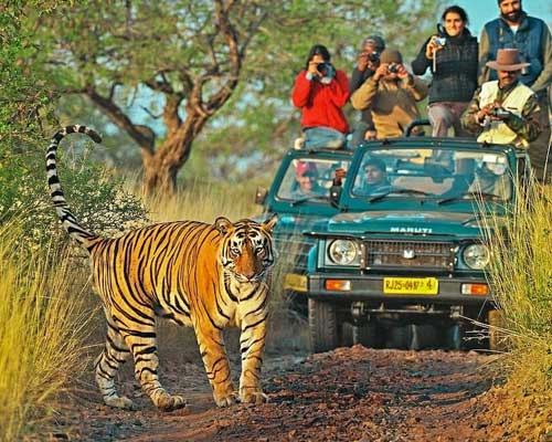 Explore the best of Ranthambore in one go...
