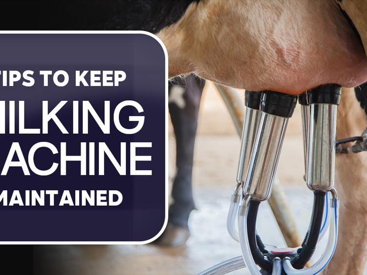 Tips to keep Milking machine maintained