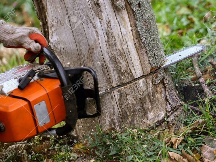 What Are the Important Steps to Take After Tree Removal?